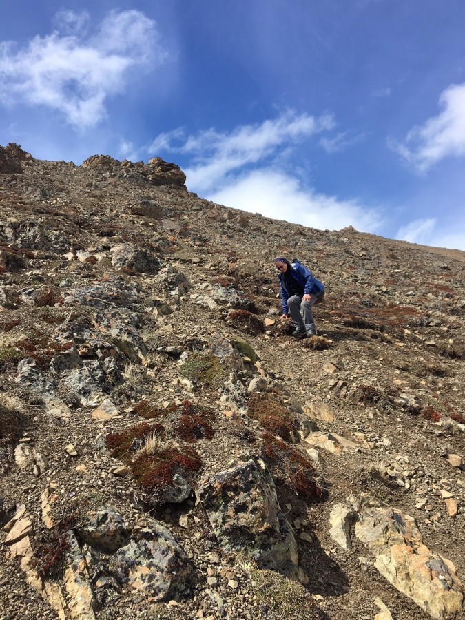 Navigating scree is always tricky; here Metta carefully and slowly makes her way down.