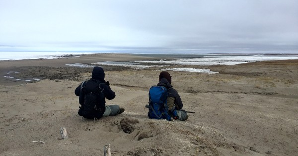 Will and Alex look out over the Arctic Ocean icepack during a blustery walk to Brownlow Point to search for waterfowl nests. Photo: Shiloh Schulte