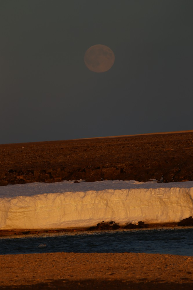 We rarely see the moonrise in the arctic, because the sun is usually up, but this lovely moonrise was a rare treat.