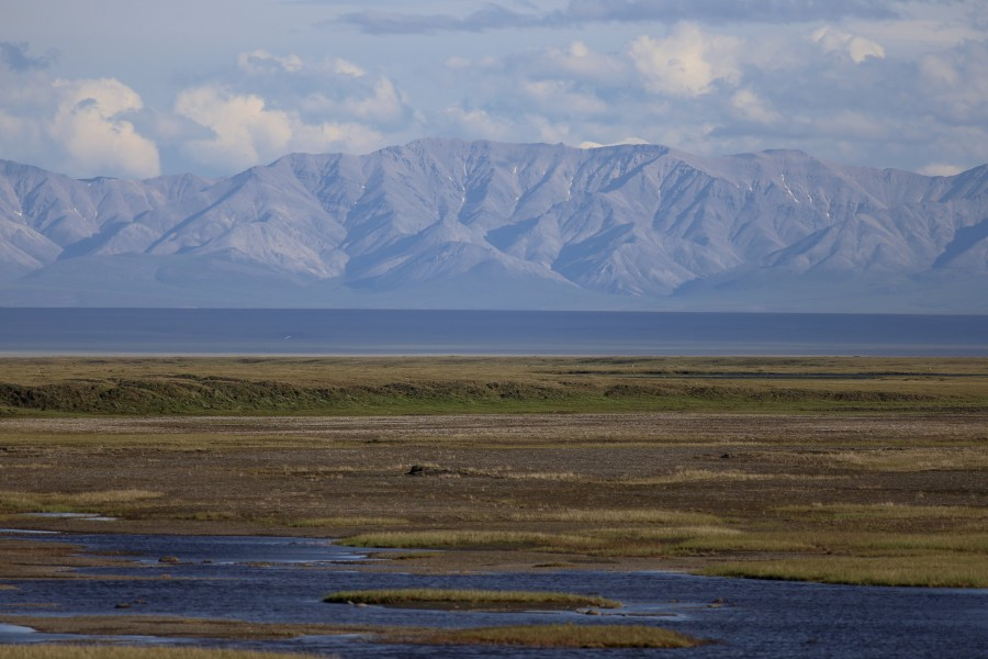 On clear days, the Brooks Range provides an epic backdrop to our daily routine. The slough in the foreground is a popular feeding area for many shorebirds, and has breeding Ruddy Turnstone, Black-bellied Plover and American Golden-Plover.