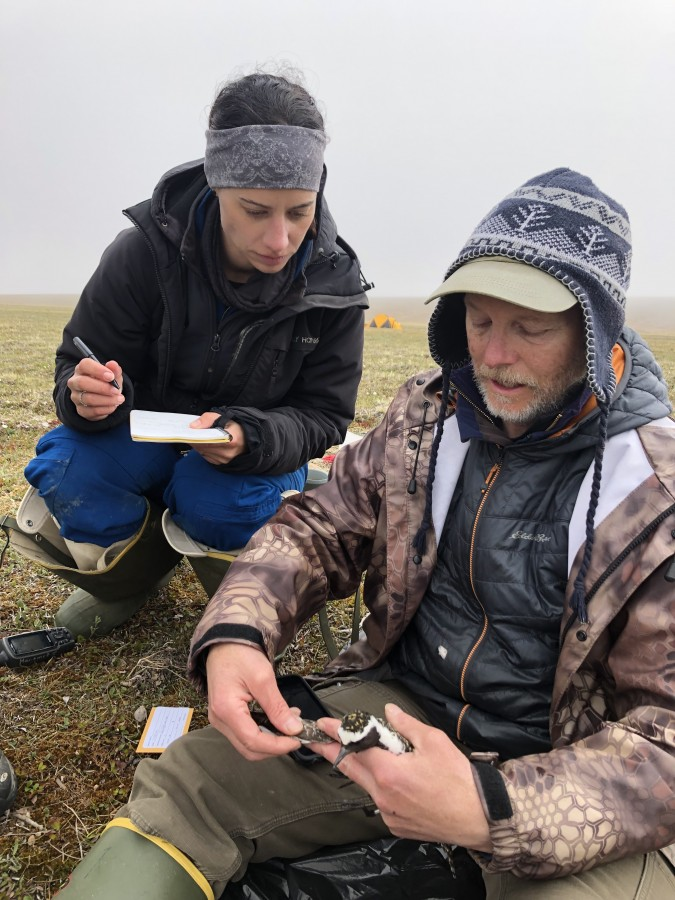 Lindall Kidd and Rick Lanctot finish banding and tagging an American Golden-Plover.
