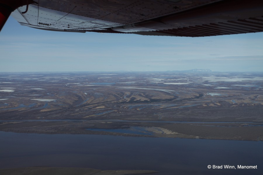 An aerial shot of the Yukon River Delta. This expansive wetland habitat supports millions of nesting waterbirds, including one of the highest densities of nesting shorebirds in the world. Image by Brad Winn