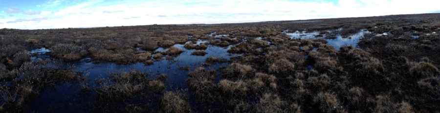 A panorama of Semipalmated Sandpiper nesting habitat in the Eastern Canadian Arctic