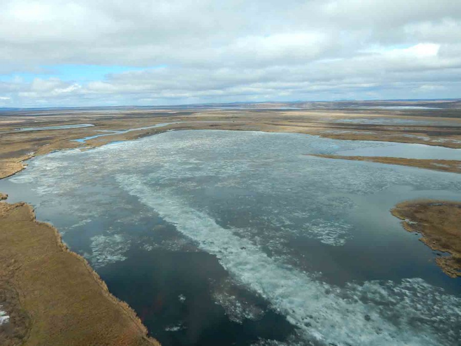 When the Yukon breaks up in the spring all that ice has to go somewhere; much of it floats downstream where it clogs the many mouths of the river lacing the delta, flooding the landscape for many miles.