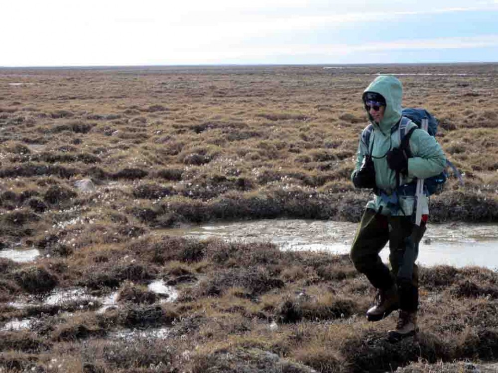 Searching vast areas of tundra is physically challenging.  The ground is uneven and makes for difficult walking, the weather is cold with high winds that take a lot out of you, and the areas we need to cover are vast.