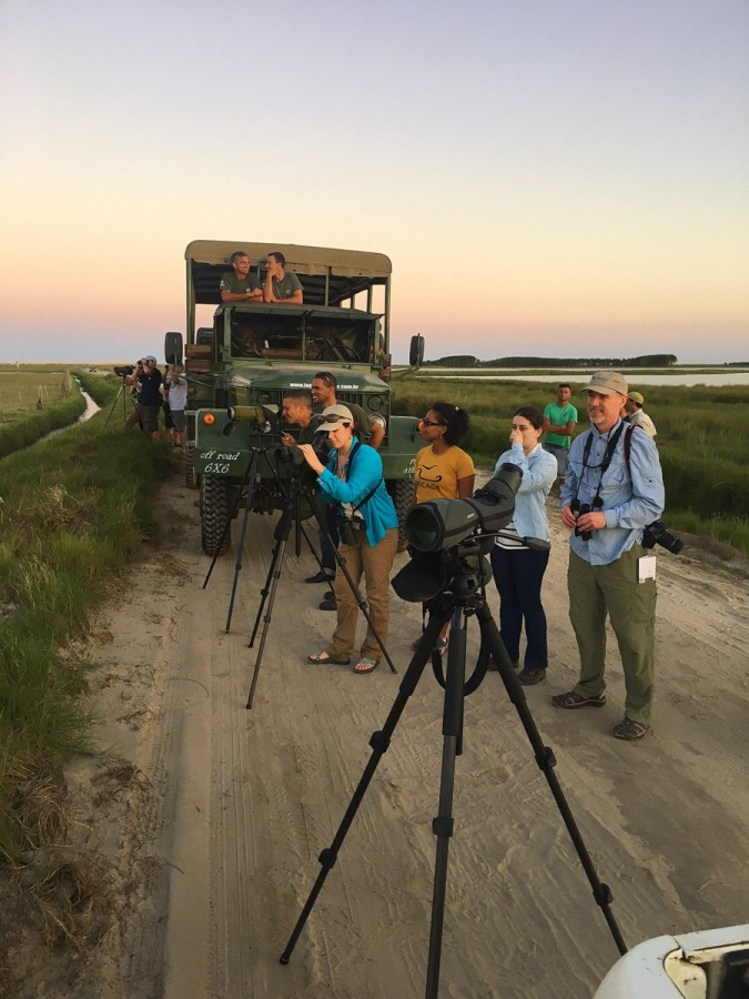 Scanning for sandpipers in Brazil