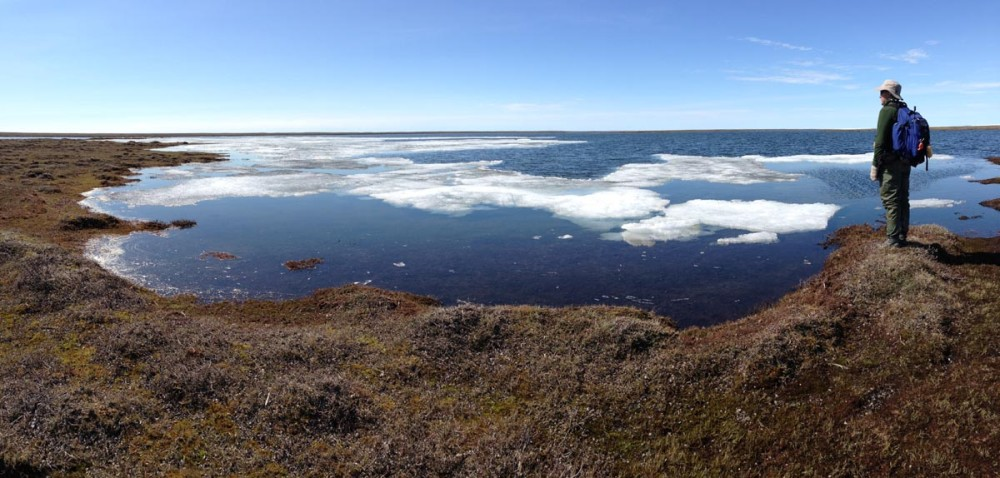Panorama of last of the melting ice on a pond on the north end of Coats Island. Photo by Shiloh Schulte