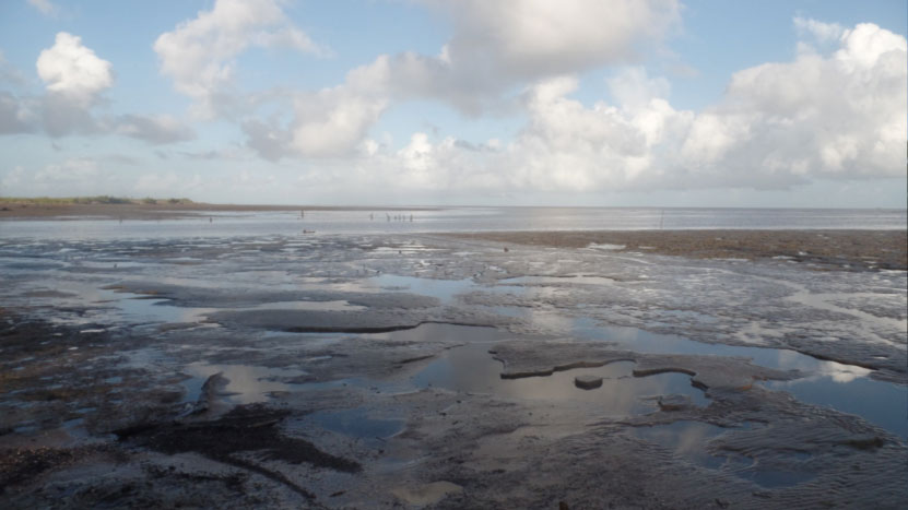 Warappa Creek mouth mudflats, full of the invertebrate prey of thousands of shorebirds.